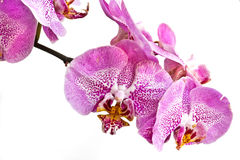 piękne orchidee Zdjęcia Royalty Free