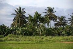 piękne palmy Obraz Royalty Free