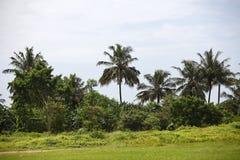 piękne palmy Fotografia Stock