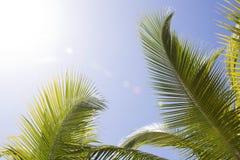 piękne palmy Zdjęcia Royalty Free