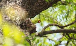 Piękne papugi na drzewie fotografia stock