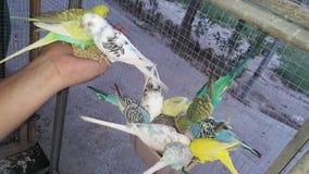 Piękne papugi urocze Zdjęcie Stock