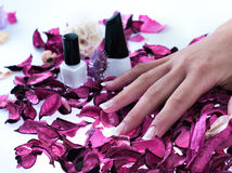 piękne paznokcie Obraz Royalty Free