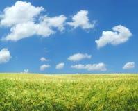 piękne pole pszenicy xxl Zdjęcia Royalty Free