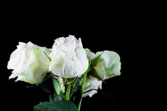 Pi?kne ro?liny z fragrant kwiatami jak salowy zdjęcie stock