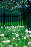 piękne sceny rocznego czasu wiosny Fotografia Royalty Free