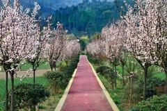 Piękne wiejskie drogi Zdjęcie Royalty Free