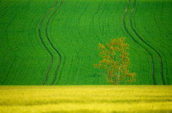 Pięknego lata krajobrazu wiejskie linie Obrazy Royalty Free
