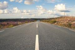 Pięknego lata sezonowa fotografia Lata pole z wierzbowymi ziele i wielkimi kolorami Fotografia od samochodowej drogi pokazuje asf Zdjęcie Stock