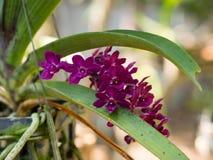 Pięknego wilde storczykowy kwiat Fotografia Royalty Free