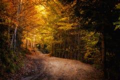 Pięknej jesieni drewien halny krajobraz Obraz Stock