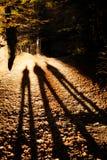 Pięknej jesieni drewien halny krajobraz Zdjęcie Royalty Free