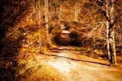 Pięknej jesieni drewien halny krajobraz Fotografia Stock