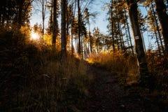 Pięknej jesieni drewien halny krajobraz Zdjęcia Stock