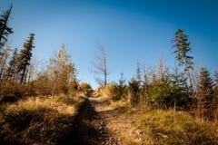 Pięknej jesieni drewien halny krajobraz Zdjęcie Stock