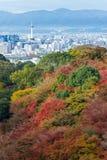 pięknej Momiji jesieni klonu kolorowy ogród przy Kiyomizu-D Obrazy Royalty Free