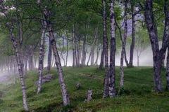 Pięknej natury Norwegia naturalny krajobraz antena Obraz Stock