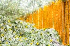 Piękni biali kwiaty i nagietki Obrazy Stock
