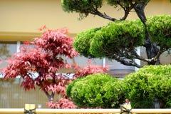 Piękni Bonsai  Zdjęcie Royalty Free