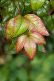 Piękni colours natura obrazy royalty free