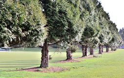 Piękni drzewa Obraz Stock