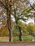 Piękni drzewa Obrazy Royalty Free