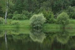 Piękni drzewa w lesie blisko jeziora zdjęcia royalty free