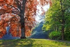 Piękni drzewa w parku. Wiosna w parku. Zdjęcie Stock