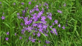 Piękni dzicy kwiaty w wiosna lesie zbiory
