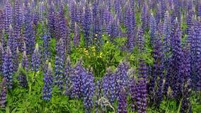 Piękni dzicy kwiaty w wiosna lesie zdjęcie wideo