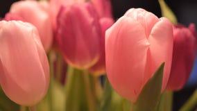 Piękni holenderscy tulipany Zdjęcia Stock