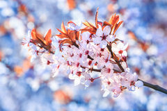 Piękni i jaskrawi lato kwiaty Obrazy Royalty Free