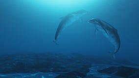 Piękni i uroczy delfiny Fotografia Royalty Free