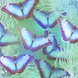 Piękni jaskrawi motyle zdjęcie stock