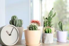 Piękni kaktusy w flowerpots i zegarze Zdjęcie Stock