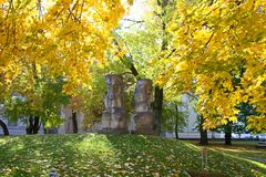Piękni kolorowi drzewa lasowi w jesieni fotografia royalty free