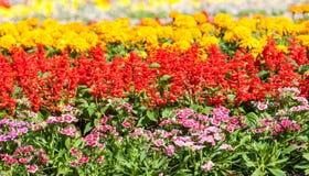 Piękni kolorowi kwiaty Obraz Royalty Free