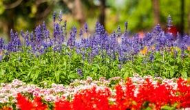 Piękni kolorowi kwiaty Zdjęcia Stock