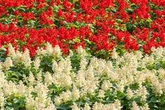 Piękni kolorowi kwiaty Obraz Stock