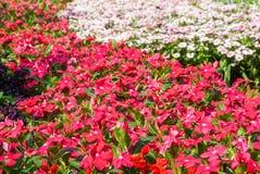 Piękni kolorowi kwiaty Obrazy Stock