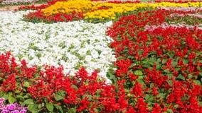 Piękni kolorowi kwiaty Obrazy Royalty Free