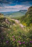 Piękni kolorowi kwiaty na wzgórzu w Crimea górach Zdjęcia Royalty Free