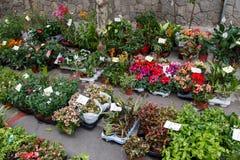 Piękni kolorowi kwiaty od sklepu Zdjęcia Royalty Free