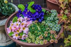 Piękni kolorowi kwiaty w garnku przy Japonia Obraz Stock
