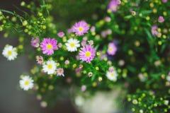 Piękni kolorowi kwiaty w kwiatu sklepie Obraz Stock