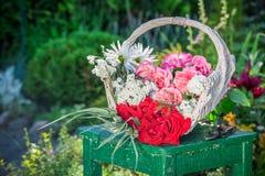 Piękni kolorowi kwiaty w lato ogródzie Obrazy Royalty Free