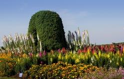 Piękni kolorowi kwiaty w ogródzie Obraz Stock