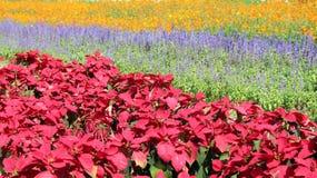 Piękni kolorowi kwiaty w polu Obrazy Royalty Free
