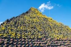 Piękni kolorowi kwiaty w polu Zdjęcia Stock
