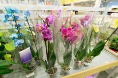 Piękni kolorowi kwiaty w sklepie Zdjęcie Royalty Free
